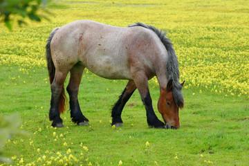 Pferd auf einer Blumenwiese