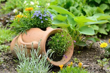 Ceramic jug at the garden bed with orange and purple flowers.