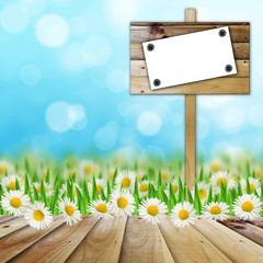 Notice board in the field of daisies
