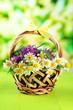 Wild flowers and spikelets in basket, on green background