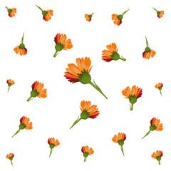 i fiori di calendula volano