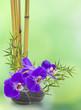 orchidée sur galet et bambou