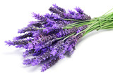 Fototapety lavender flowers