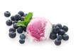 Blueberry Ripple Icecream