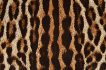 leopard fur closeup