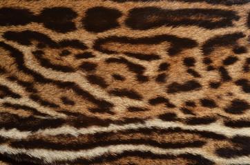 closeup of ocelot spotted fur