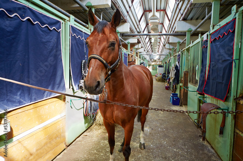 Chestnut horse in horse barn