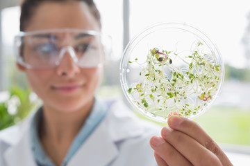 Chemist holding a pane with tests of plants