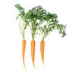 große und kleine Karotten