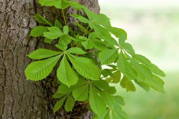 Baumstamm mit grünen Zweig