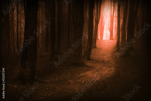 Dark, fairytale trails in the forest in an autumn foggy day
