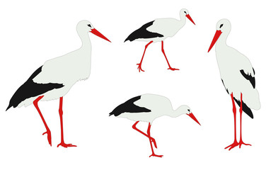 storks illustration - vector