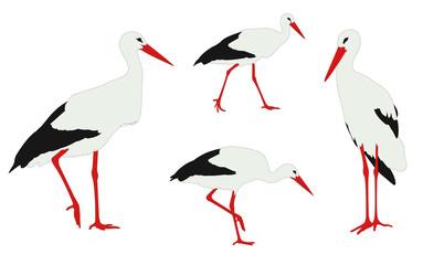 storks illustration - vector