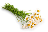 Fresh chamomile flowers isolated
