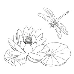 Water Lily and dragonfly.