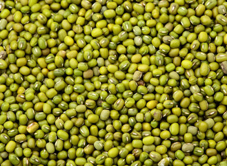 Mung bean background
