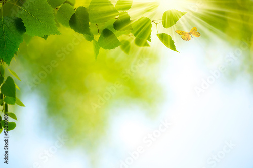 Beauty Summer Day. Abstract environmental backgrounds for your d