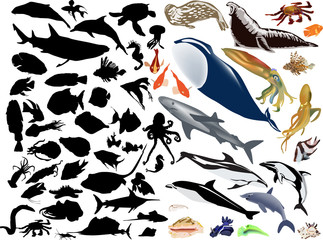 large collection of sea animals