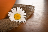 Chamomile flower on wooden background