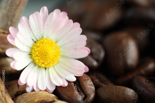 Blumiger Kaffee