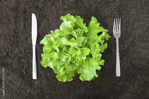 butter lettuce salad in soil with fork and knife