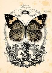 Fond papillon