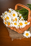 Chamomile flower in basket