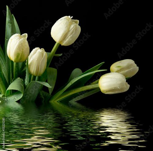 Panel Szklany Białe tulipany