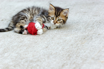 Little kitten playing with ball of wool