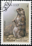 stamp printed in Russia shows marmot
