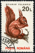 stamp printed in the Romania, shows the Eurasian red squirrel