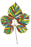 Rainbow colored leaf