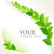Fresh green leaves decorative background