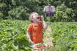 Kind am Erdbeerfeld isst Erdbeere