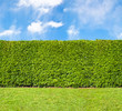 Tall hedge, endless seamless pattern - 53242618