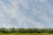Orzo e cielo orizzontale