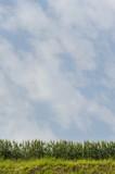 Orzo e cielo verticale