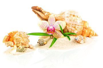 Spa concept with seashells, bamboo and orchid