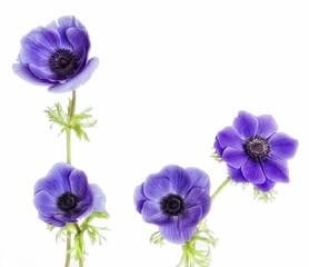 Composicion floral con anemonas purpura.