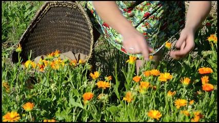 cogiendo flor para productos ecologicos