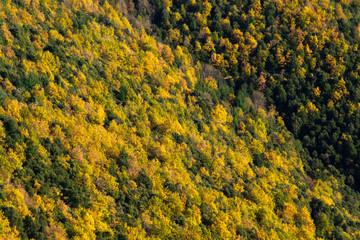 Vista de bosque amarillo y verde. Montseny.