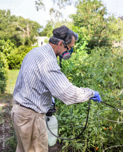 Man Spraying Insect Infested Tomato Plants in Garden
