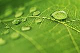 Fototapety Water drop on green leaf