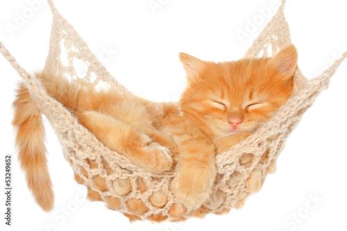Cute red haired kitten sleeping in hammock - 53249652