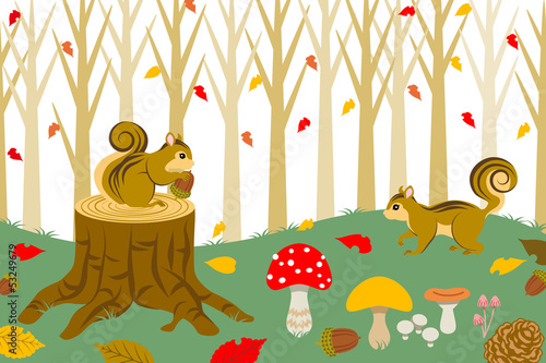 Squirrel Harvesting in autumn  forest