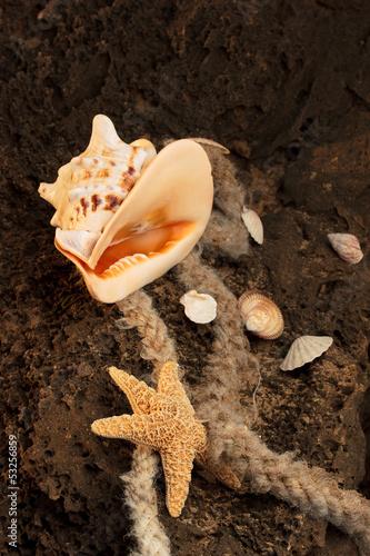 Seashell on the beach - 53256859