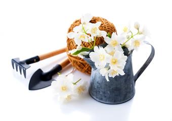 Jasmine flowers in the garden watering can and garden tools