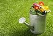 Galvanised metal watering can and flowers