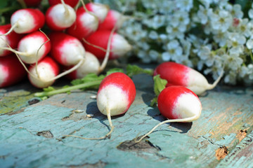 Fresh ripe radish closeup
