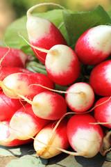 Fresh ripe radish closeup